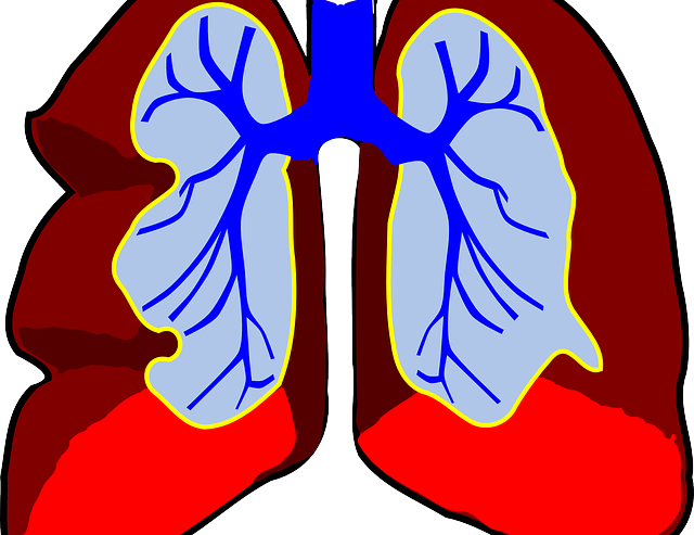 lungs-39980_640-2